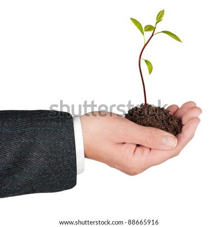 Avocado sapling  in hand as a gift of agriculture - stock photo