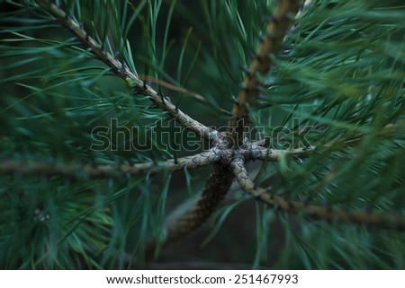 Awesome fir branches - stock photo