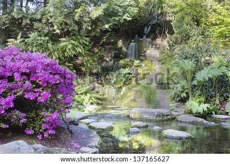 Azaleas Blooming by Waterfall at Crystal Springs Rhododendron Garden in Spring - stock photo