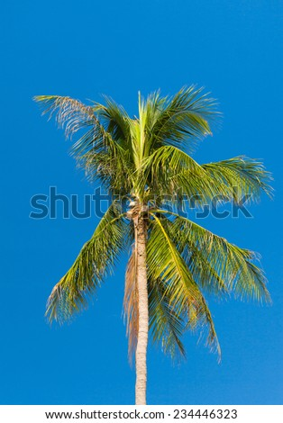 Azure Backdrop Palm Overhead  - stock photo