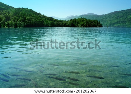 Azure lake / Limpid blue water with fishes   - stock photo