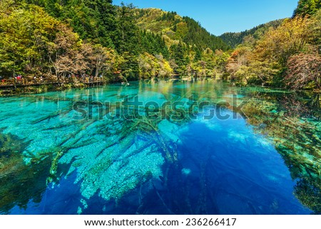 Azure lake with submerged tree trunks. Jiuzhaigou Valley was recognize by UNESCO as a World Heritage Site and a World Biosphere Reserve - China - stock photo