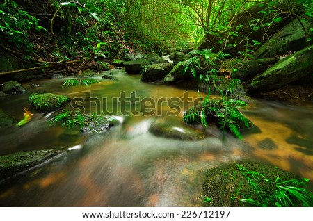 Babbling Brook in Green Forest - stock photo
