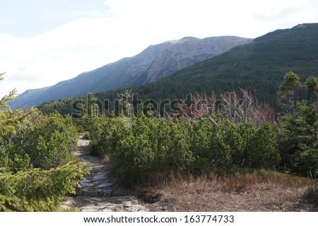 Babia hora 1725 m, Orava, Slovakia - stock photo