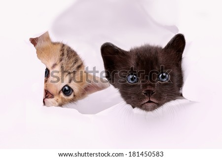 Babies cat in paper side torn hole isolated - stock photo