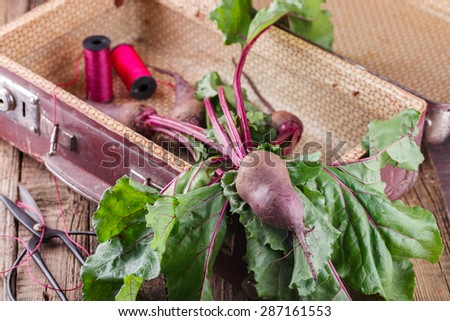 Baby beets with foliage in a vintage suitcase.selective focus - stock photo
