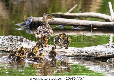 baby birds in the nature, nature series. - stock photo