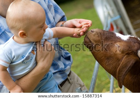 Baby boy feeding goat. Close up on hand and goat head - stock photo