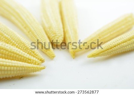Baby corn on white background, Baby corn, young corn, or cornlettes, is a cereal grain taken from corn (maize) harvested early while the stalks are very small and immature. - stock photo