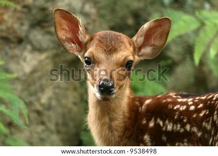 Baby Deer, Japan - stock photo