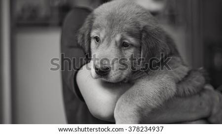 Baby Dog  - stock photo