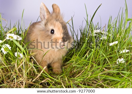 Baby easter bunny eating grass and daisies - stock photo