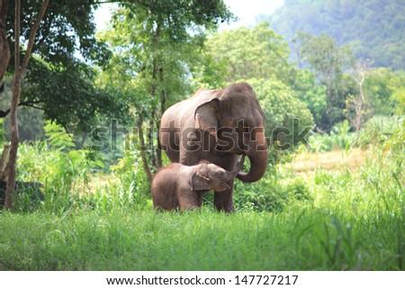 Elephant Eating Food Baby Elephant Eat Food at