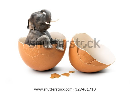 Baby elephant hatch from internal eggshell in concept of new mammal life isolated on white background - stock photo
