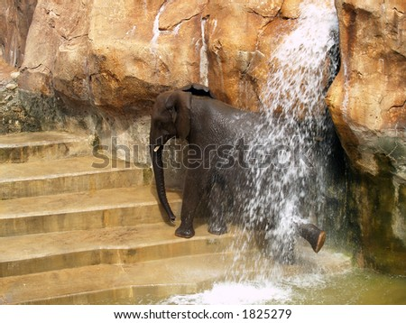 Baby Elephant take shower - stock photo