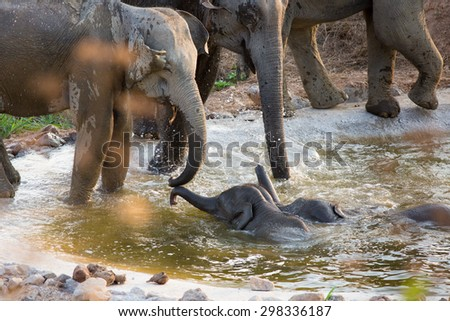 Baby elephant with mother play in cement ponds in the prairie safari. - stock photo
