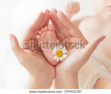 Baby foot ��?��?��µ��? camomile in mommy's hands, shallow DOF. - stock photo