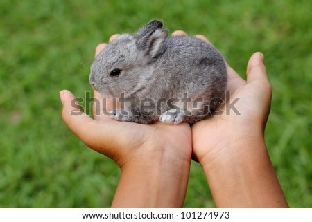 Baby grey rabbit in grass - stock photo