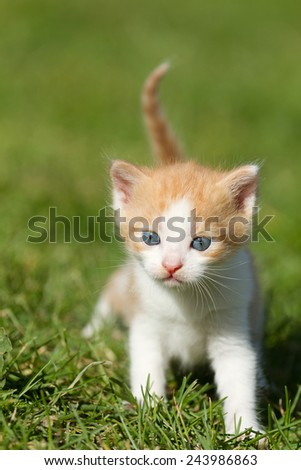 Baby kitten on the green grass  - stock photo