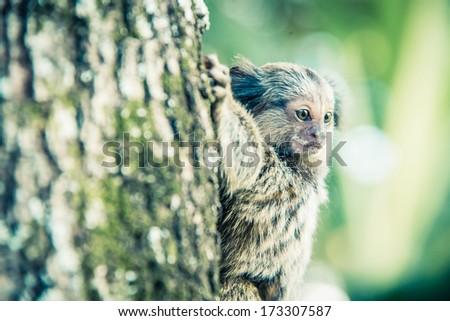 Baby monkey on tree. Greenish filter - stock photo