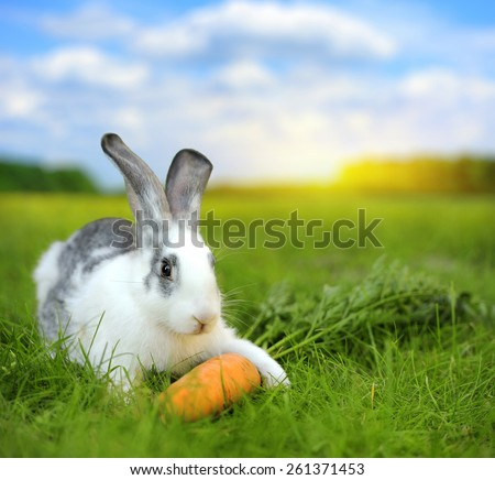 Baby rabbit in grass on meadow. Summer day - stock photo