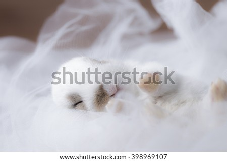 baby rabbit on white cloth with soft filter  - stock photo