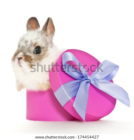 baby rabbit sitting in a purple box with a bow - stock photo