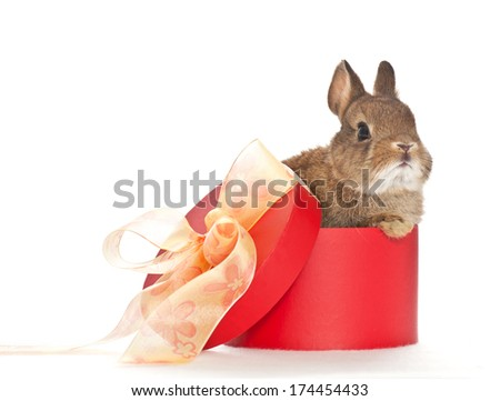 baby rabbit sitting in a red box with a bow - stock photo