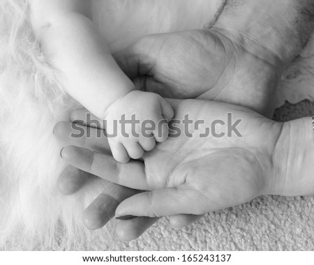 Baby's hand held in parents hands. Black and white image                       - stock photo