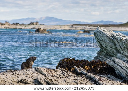 baby seal on the sharp rocks - stock photo
