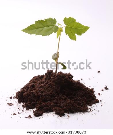 Baby Tree - stock photo