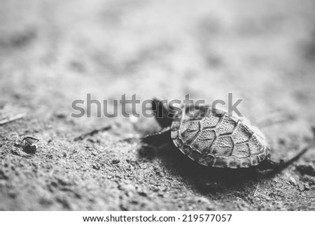 Baby turtle - stock photo