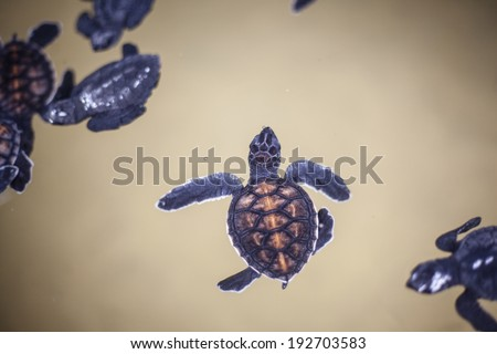 Baby turtle in a farm  - stock photo