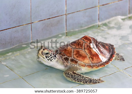 baby turtle in the pool - stock photo