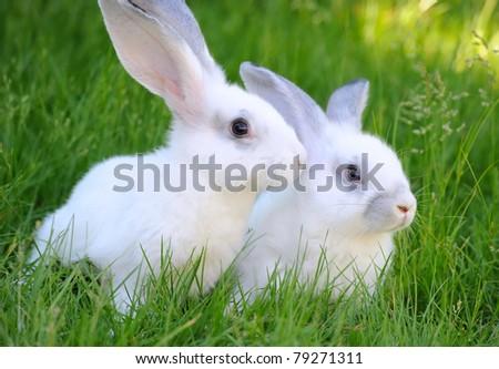 Baby white rabbits in grass - stock photo
