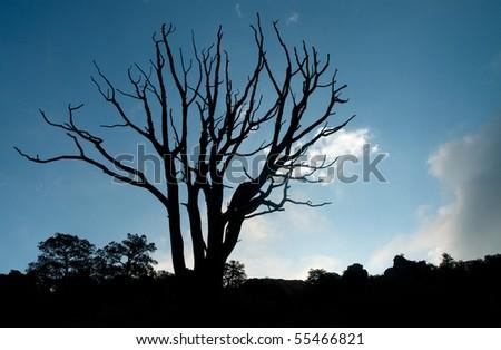 back lit dead tree - stock photo