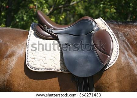 Back of saddled stallion on a training summertime - stock photo