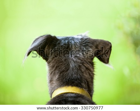 Back of the head of a terrier dog looking out into a blurred out field of green grass and trees - stock photo