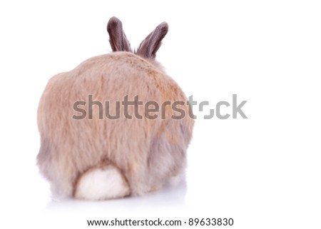 back view of a cute brown little rabbit, on white background - stock photo