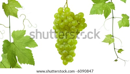 backdrop of grapes and vine-leaves isolated on white background.Please take a look at my other images of grape-leaves - stock photo