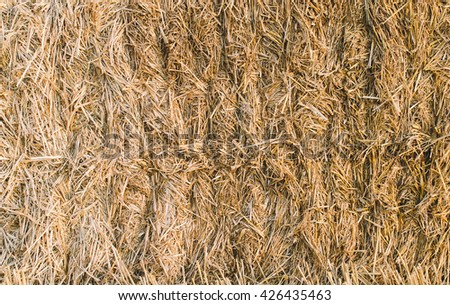 Backgorund texture of the hay in sunset time - stock photo