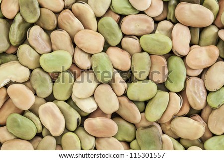 background and texture of dried fava (broad) bean - stock photo