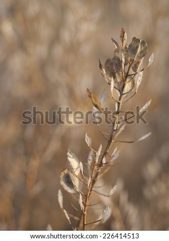 Background autumn grass texture with single stem of seed pods in foreground focus - stock photo