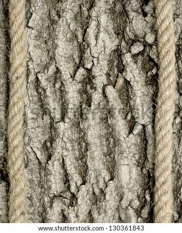 background bark with white - stock photo