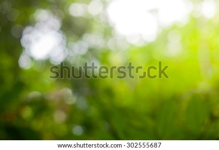 background blurred abstract beautiful , green forest, desert over colorful sunset background. Ecology concept. World Environment Day concept. - stock photo