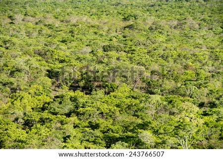 Background - Brachystegia Woodlands from Top of Black Rock, Kasungu National Park, Malawi, Africa - stock photo