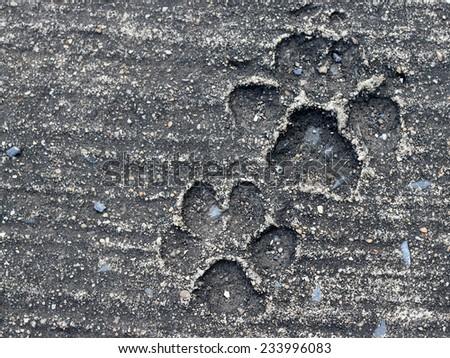 Background, Dog footprint on concrete - stock photo