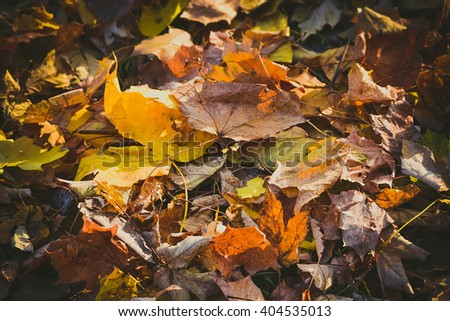 background dry maple leaves filter,   view from above - stock photo