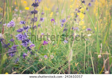 Background: flowers in a meadow - stock photo