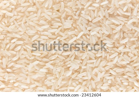 Background from rice. - stock photo